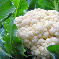 Цветная капуста: выращивание, уход, сорта