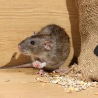 Родентициды помогут избавиться от крыс и мышей