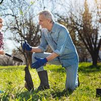 Саженцы плодовых деревьев: секреты старого садовода