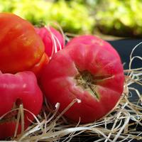 Розовые и малиновые томаты: 16 отменных салатных сортов