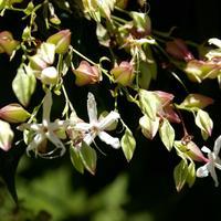 Какие цветы пахнут шоколадом? Растения с незабываемыми ароматами