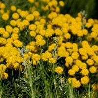 В царстве ароматов: растения с древесными, бальзамическими и кухонными нотами