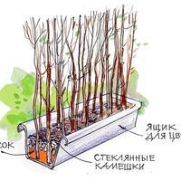 Садовая ширма в ящике: мастер-класс