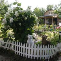 Распространенные ошибки в дизайне сада: аксессуары, зеркала и посадка растений рядами