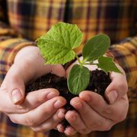 3 необычных способа посева огурцов. Действительно ли они эффективны