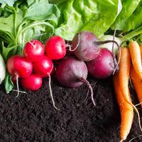 На пути к природному земледелию. Экологически чистый урожай — это просто?