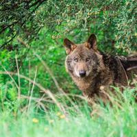 Азбука безопасности в лесу: что делать при встрече с диким зверем