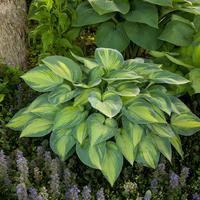Непритязательные красавцы: выбираем растения для клумбы на солнце и в тени