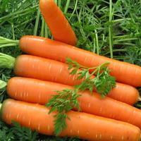 Посев моркови по лунному календарю