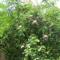 Новый сезон - новый сад