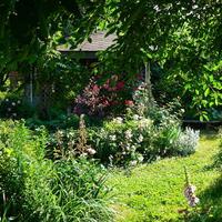 """Мой сад - мое """"место силы"""""""