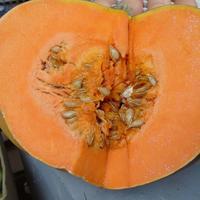 Овощ ноября – тыква