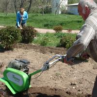 Сезонные работы в саду и огороде: первая неделя мая