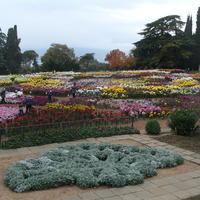 Прощальный танец осеннего бала хризантем Никитского ботанического сада (Крым)