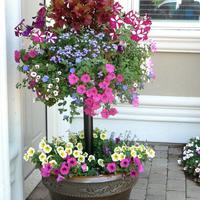 Контейнерные сады Памелы Кроуфорд