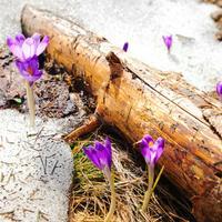Сезонные работы в саду и огороде: вторая неделя марта