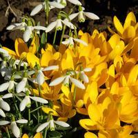 10 самых ранних цветов для вашего сада