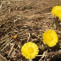 Листаем народный календарь: конец марта - начало апреля