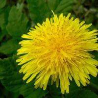 9 способов борьбы с сорняками