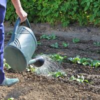 Сезонные работы в саду и огороде: конец мая - начало июня