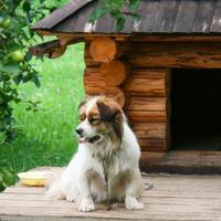 Интересные идеи собачьих будок