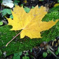 Листаем народный календарь: 30 сентября - 6 октября