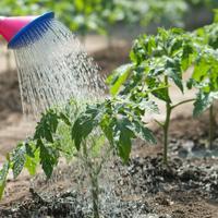 Каждому овощу - свой полив