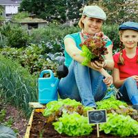 3 ошибки, которые совершают огородники