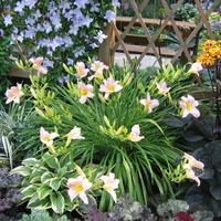 Использование контрастов при создании цветников - советы практика