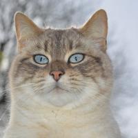 У кошек скоро праздник! А подарки готовы?