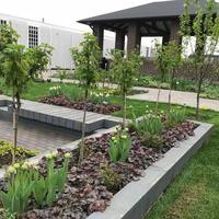 Чудеса садовые. Уникальные деревья и кустарники на вашем садовом участке