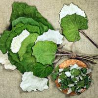 Рецепты здоровья: мать-и-мачеха от кашля и бронхита