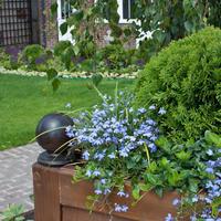 Контейнерное озеленение: профессиональные советы по выбору растений