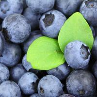 Рецепты здоровья: ягоды черники при желудочно-кишечных заболеваниях