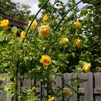 Сам себе ландшафтный дизайнер, или Ошибки любительского садоводства