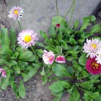 Сорняки, которые я выращиваю