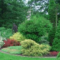 Сад кустарников: критерии выбора растений