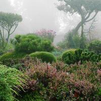Хвойные и компания: подходящие компаньоны для хвойных растений в саду