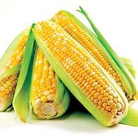 Кукуруза: и полезна, и вкусна!