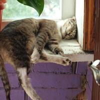 Кошки на даче тоже к удаче!