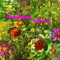 Цветы-это украшение нашей жизни на даче.