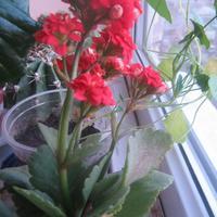 На окошке расцвели цветочки.