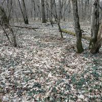 """В лесу """"весна"""" в начале февраля"""