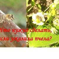 Что нужно сделать, если ужалила пчела?