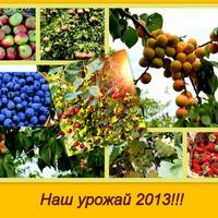 Наш достойный урожай 2013!!!!