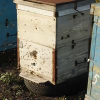 Сосед разводит пчёл, что посоветуете?