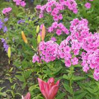 Период цветения на даче