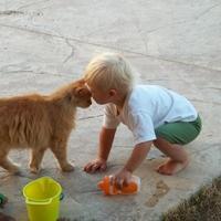 Кто опаснее для аллергика: кот или кошка?