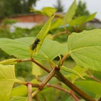 Вред от насекомых