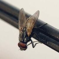 Кабы не ... мухи